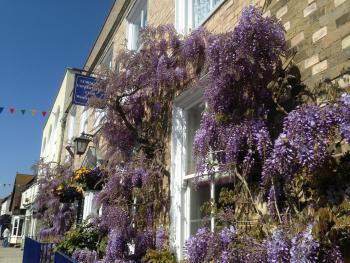 Wisteria House - Wisteria in bloom