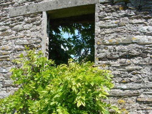 Garden view through old barn wall