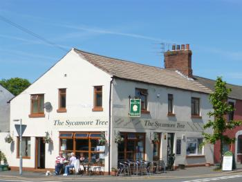 The Sycamore Tree -