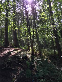 Woodland walks on your doorstep