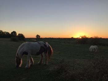 The Surrounding Meadow Land With Roaming Horses