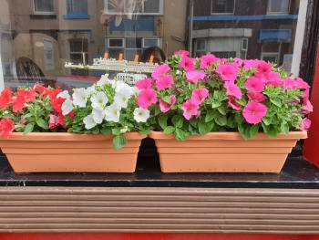 Foxhall Village Guest House - Window Pots