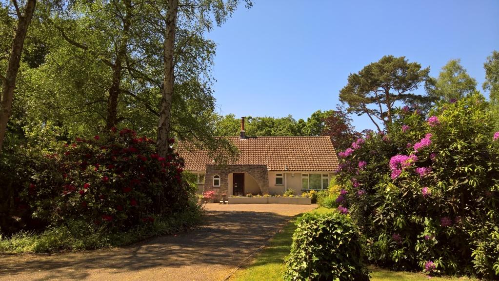 Birchcroft - front garden and driveway