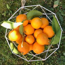 Nos oranges de Janvier