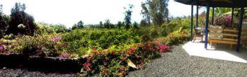 Gazebo with Coffee Orchard below
