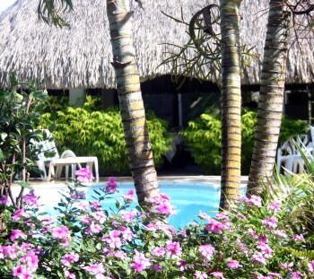 Piscine derrière les palmiers du jardin