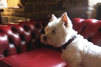 Poppy our pub dog rules the inn
