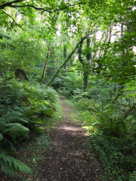 65 acres of woodland at Millendreath