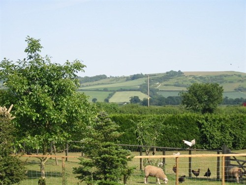 Wayside Orchard and View