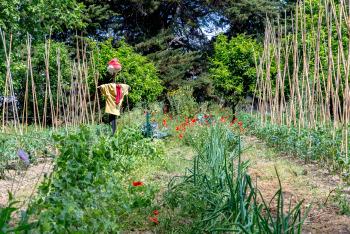MAS Bazan, jardin en permaculture
