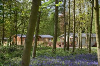 Lodges in bluebell woodland