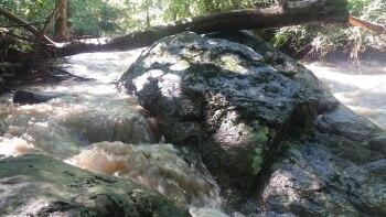 Lynch River Rapids