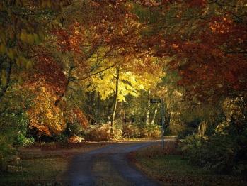 Autumn at Hollicarrs