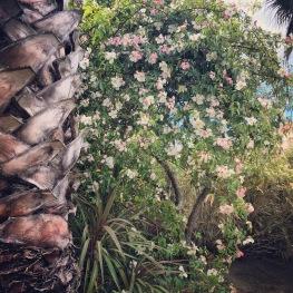 Jardin villa ioanes