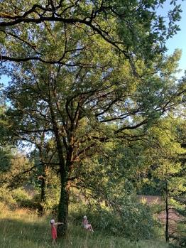 Les balançoires cachées dans la nature