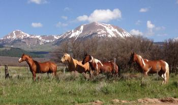 Sanctuary Horses in front of Mt. Peale