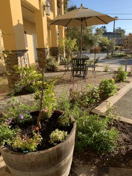 2019 Landscape in the patio area