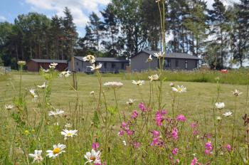 Hollicarrs - Woodland Lodge - Lodges in wildflower meadow