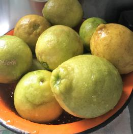 Farm Produce- Lemons