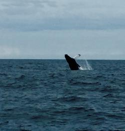 Whale viewing while charter fishing!