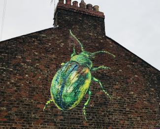Our Tansy Beetle mural to raise awareness and help conserve this beautiful beetle, only found in Yorkshire!