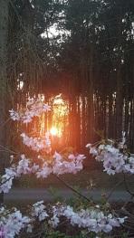 Sunset at Hollicarrs