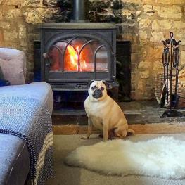 Mr Bojangles enjoying the log burner