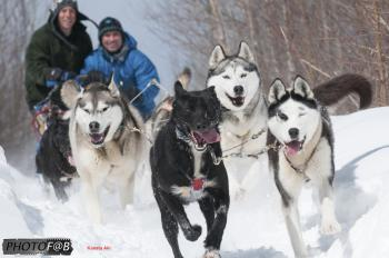 Dog Sledding, Kanata Aki, Mont Tremblant