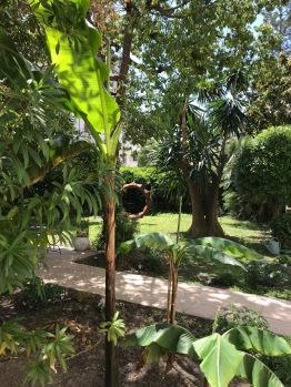 Un Jardin Tropical en Ville