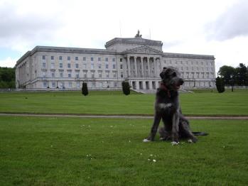 Irish Wolfhound Puppy at Stormont