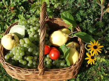 Quelques produits de notre jardin