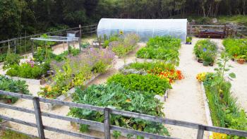 Our Vegetable and Flower Garden