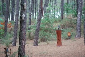 vue forêt