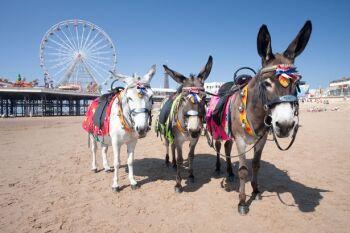 Beach- Donkey rides