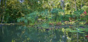 The Lagoon at Manoas