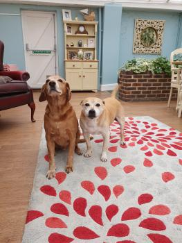 We are a dog / pet friendly home. Say hello to George and Charlie upon your arrival.