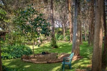 Back yard, young avocado tree