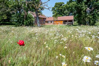 South Park Farm Barn - View across wildflower meadow