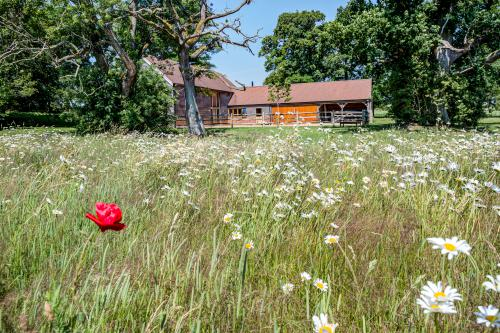 View across wildflower meadow