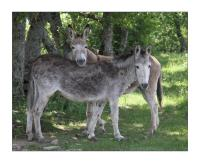 Our donkey BIBI & ANEMONE