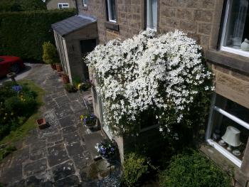 Clematis over the front entrance
