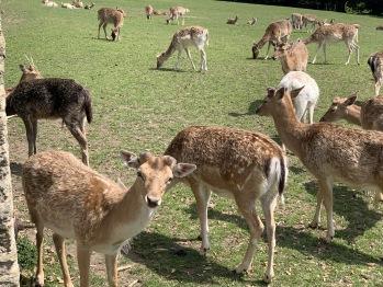 Prideaax deer park