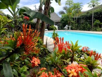 Fleurs au bord de la piscine