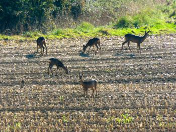 Deer in field opposite