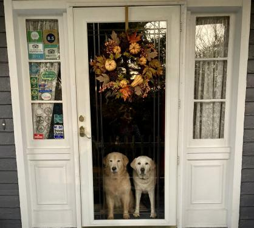 Friendly greeters