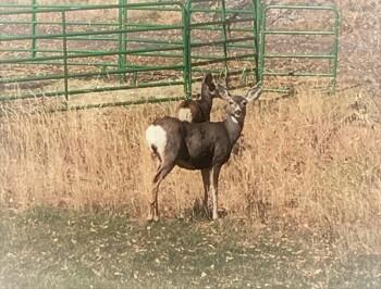 Ohh Deer!