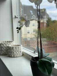 King / Twin Bedroom Window View