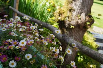 les charmes du petit pré-chambre côté jardin-terrasse