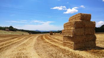 Campos de cereal de los alrededores