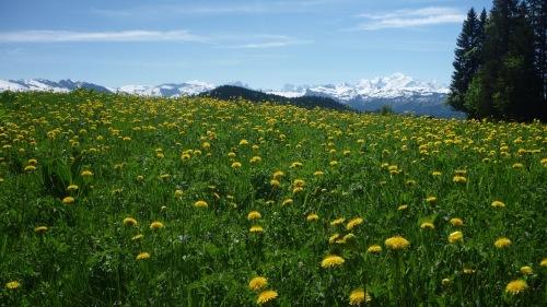 La chaine du Mont-Blanc